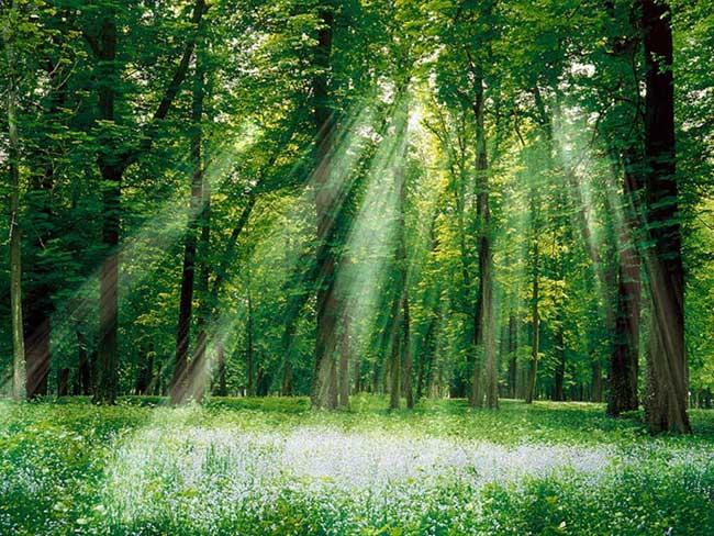 où faire l'amour forêt